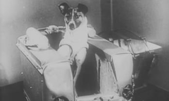 Laika blev första hunden i rymden