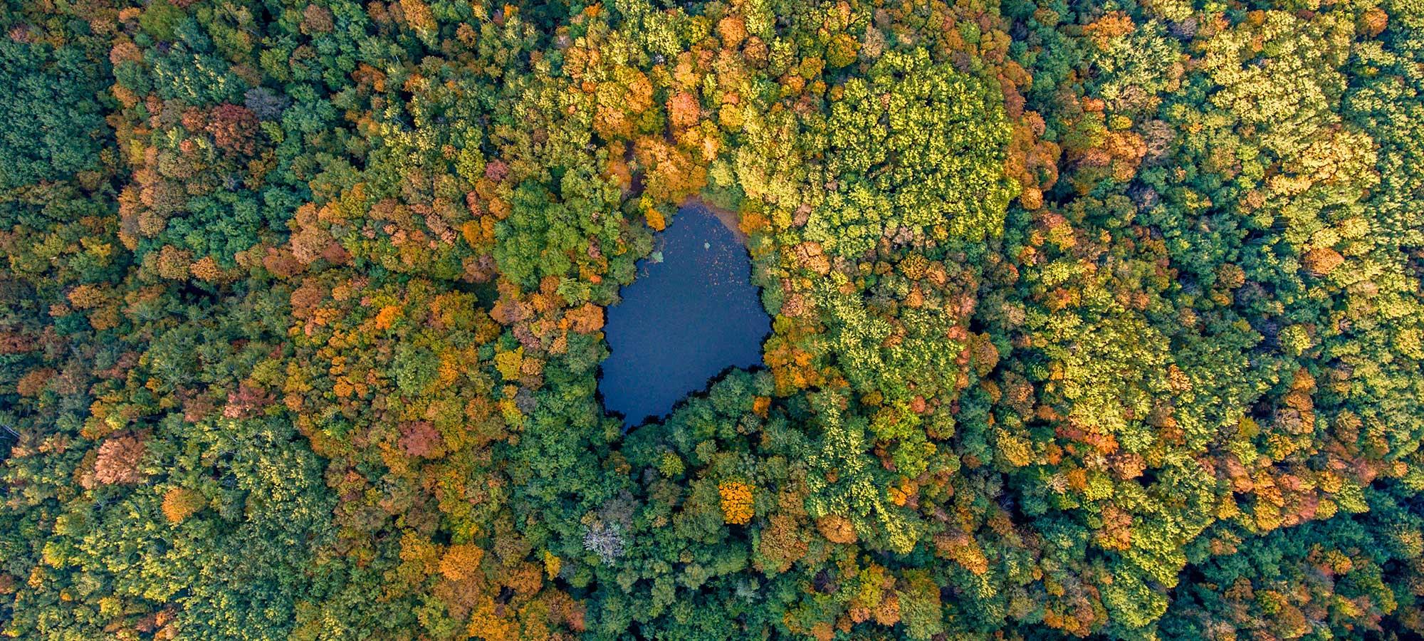 Övervaka skog från satellit