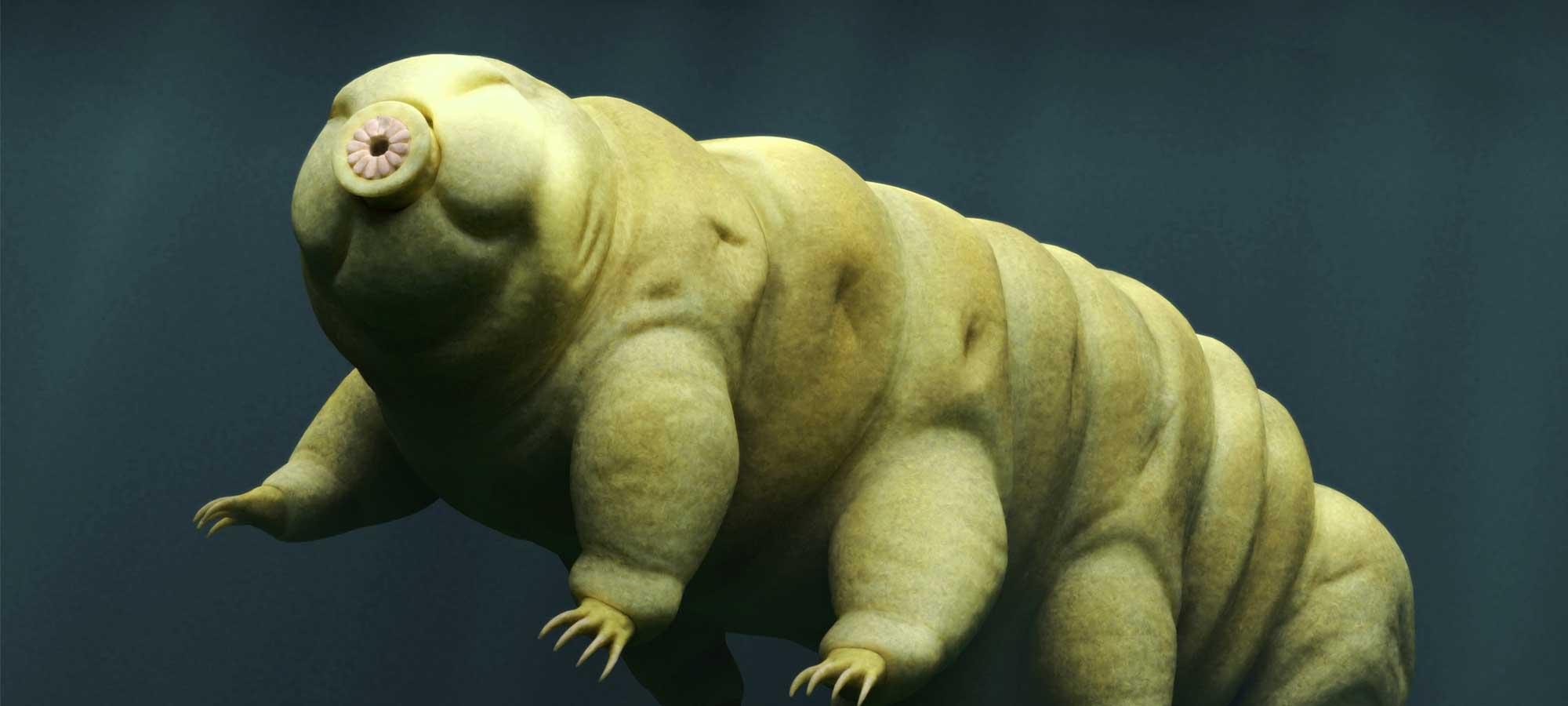 Björndjur: djuret som kan överleva i rymden