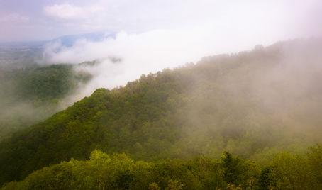 Bilden visar en skog som släpper ifrån sig vätska i luften. När detta kombineras med att vätska avdunstar från marken bildar de två processerna tillsammans evapotranspiration.